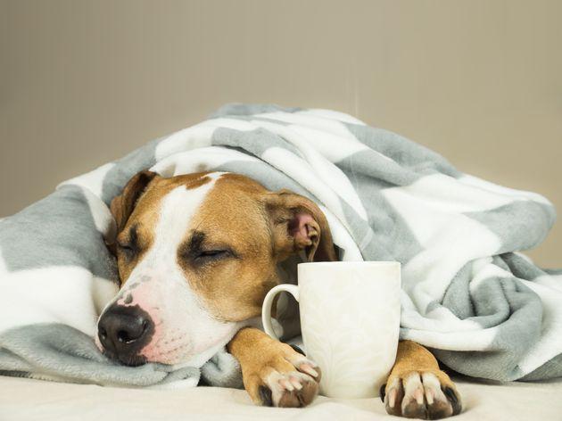 Café pode causar convulsões, vômitos e até a morte do