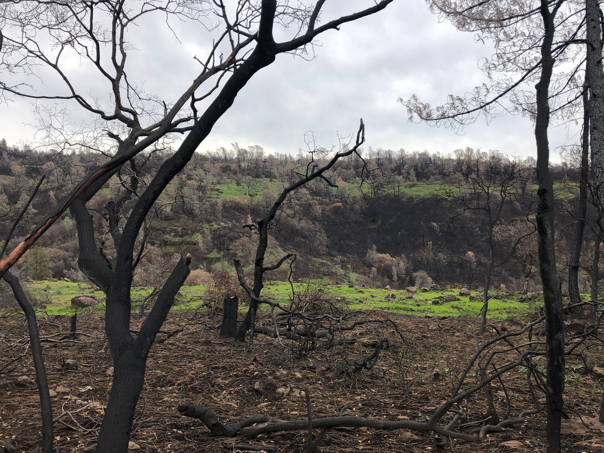 A ridge on the road out of Paradise, still charred from the Camp fire. — Feb. 12
