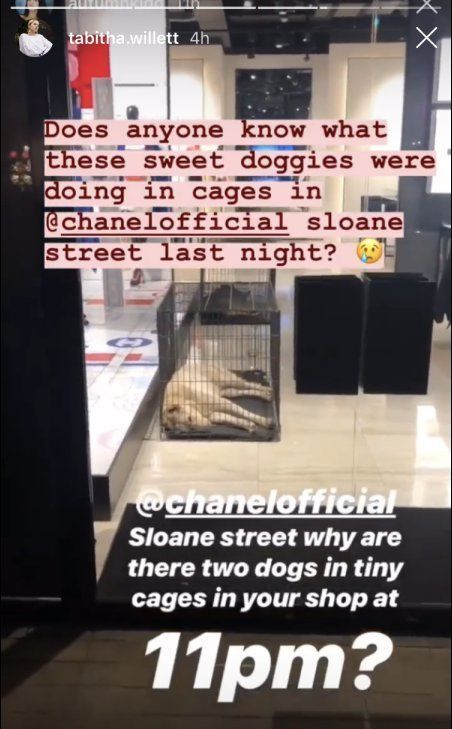 Chanel Accused Of Animal Cruelty After Pictures Emerge Of Caged Dogs In London