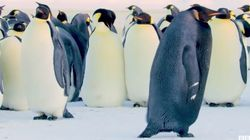 'Rarest Penguin On Earth' Caught On Camera In
