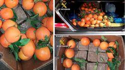 À Melilla, 8 kilos de haschich cachés dans une cargaison d'oranges venant du