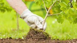 Η χώρα που θα φυτέψει 1 δισ. δέντρα κατά της κλιματικής