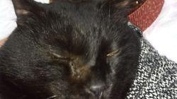 #猫の写真へたくそ選手権