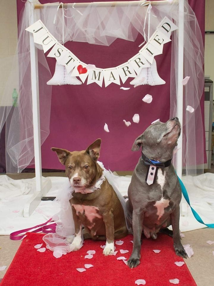 animal-shelter-throws-senior-dogs-adorable-wedding-so-they-can-get-adopted-together