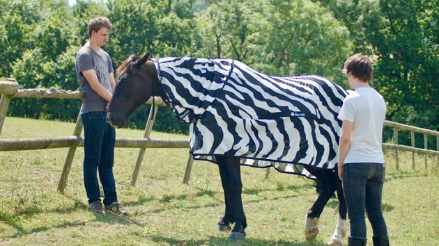 People Are Dressing Horses As Zebras To Solve An Age-Old Scientific