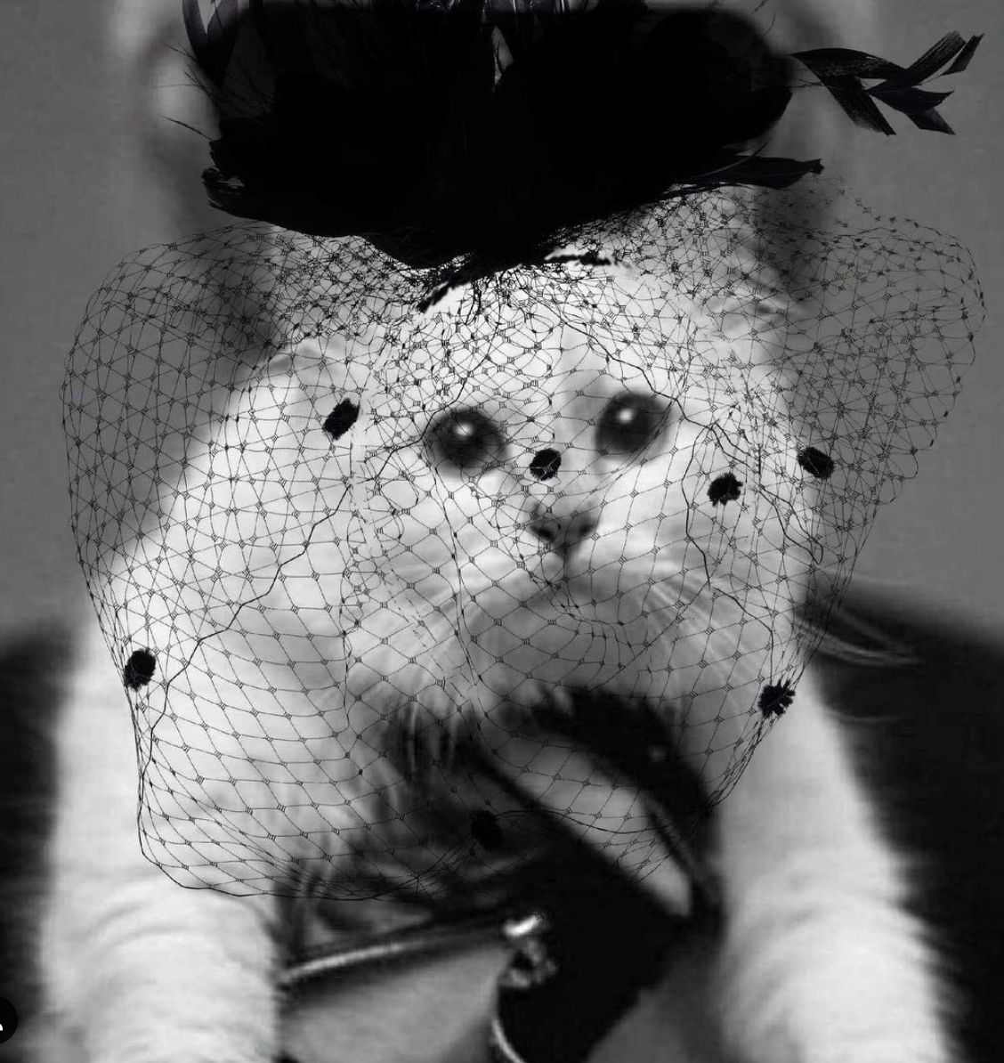 AWESOME ANIMALS: Choupette Lagerfeld's Heartfelt Tribute, Plus 4 Other Animal Tales To End The