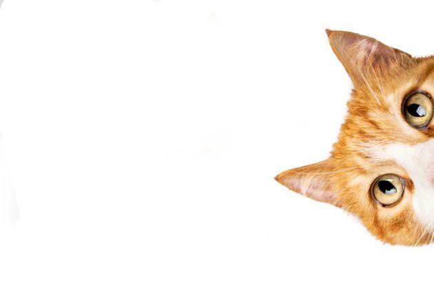 ニャントリー「2月22日は猫の日にゃ」