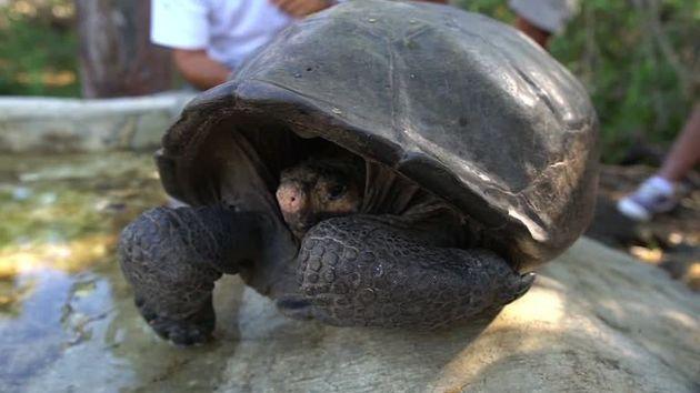 «Χελώνα-γίγαντας» των νησιών Γκαλαπάγκος βρέθηκε για πρώτη φορά μετά απο 110