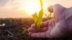 La biodiversité, si cruciale pour notre alimentation et notre agriculture, disparaît de jour en