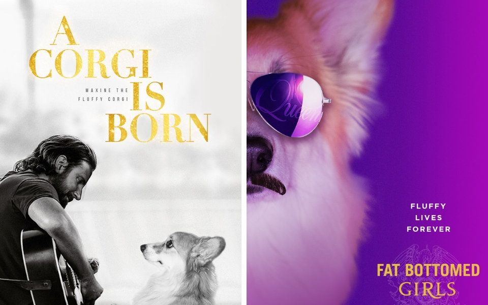 Corgi Gets Edited Into Movie Posters, And They're Nothing Short Of Adorable