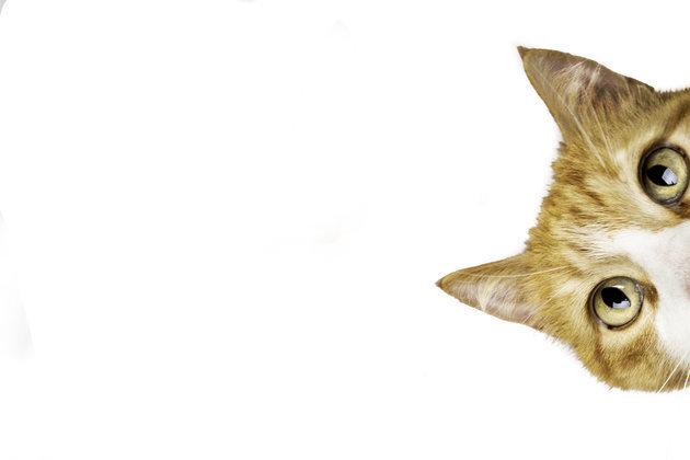 일본 기업들이 '고양이의 날' 맞아 고양이로