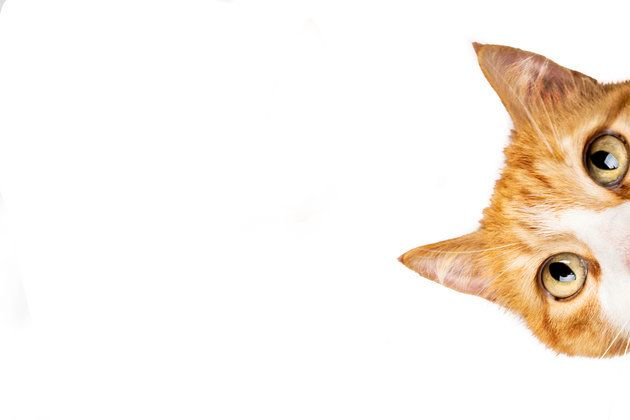 일본 기업들이 '고양이의 날' 맞아 한