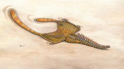 Une mystérieuse créature vieille de 480 millions d'années identifiée grâce à ses tripes retrouvées au