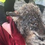 3 Männer glauben, sie retten hilflosen Hund –bis das Tier in eine Klinik