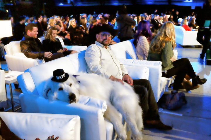 Duke lounging on a couch at the 2015 World Dog Awards.