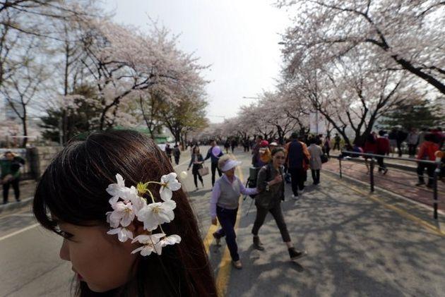 서울 여의도 윤중로에서 시민들이 벚꽃 나들이를 즐기고 있다. <한겨레>
