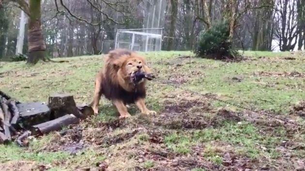 Le zoo de Dartmoor fait polémique en proposant un jeu de tir à la corde contre un