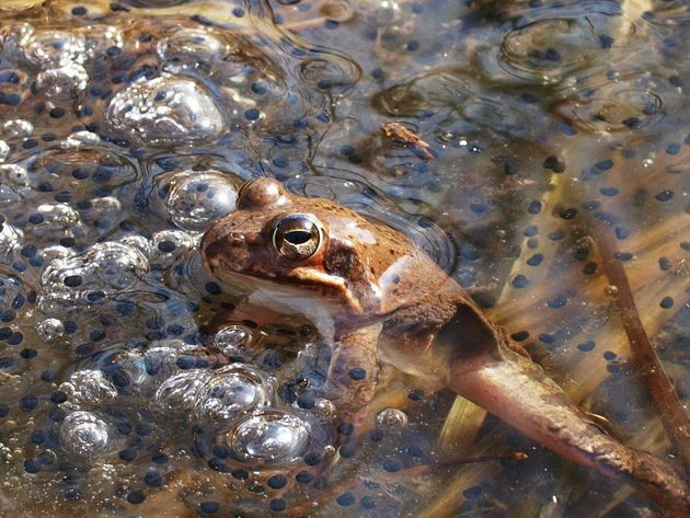 지리산 개구리가 알을 낳았다. 정말 올해 봄은 이렇게 빨리