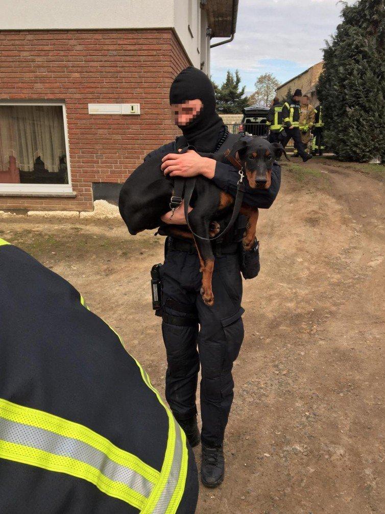 Hunden wurden Ohren und Schwanz abgeschnitten: Polizisten befreien Welpen aus