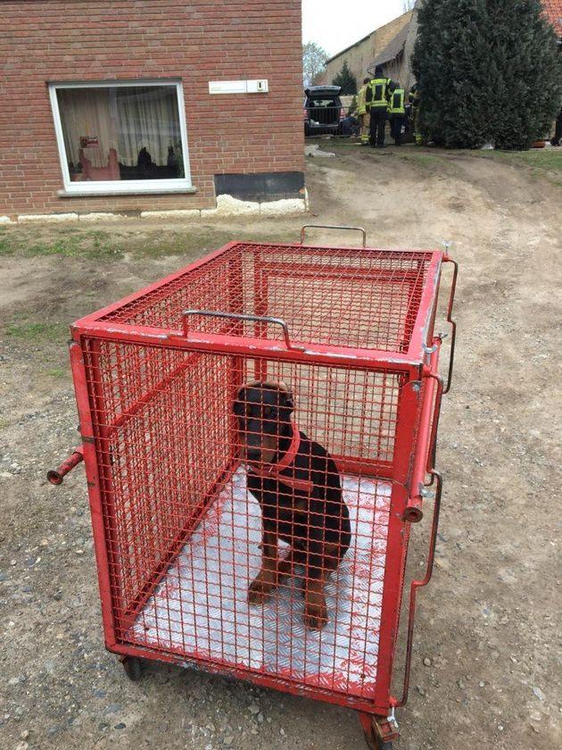 Einer der Junghunde, der von seiner Besitzerin misshandelt