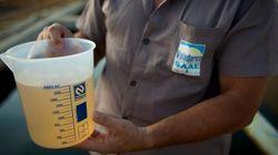 Alta concentração de substâncias tóxicas é encontrada na lama da
