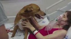 Mulher com câncer ganha visita de cão de estimação em hospital no