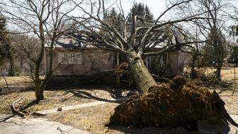 A tree toppled by wind fell upon a home in Springfield, Pa., Monday, Feb. 25, 2019. Thousands of utility customers remain without power in Pennsylvania as high winds continue to roar through the state, knocking down trees and power lines. (AP Photo/Matt Rourke)