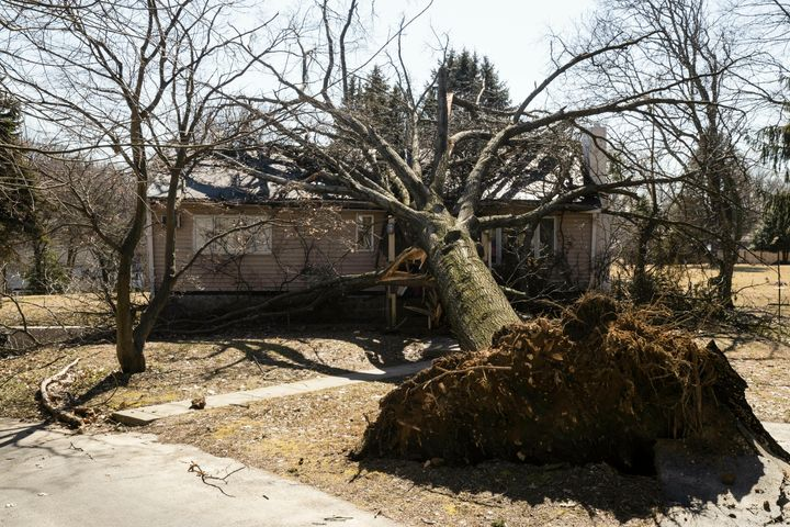 A tree toppled by wind fell upon a home in Springfield, Pa., on Monday after high winds roared throughout the region.