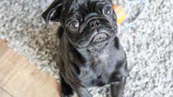 Hund gepfändet und bei Ebay verkauft – Polizistin verklagt jetzt die
