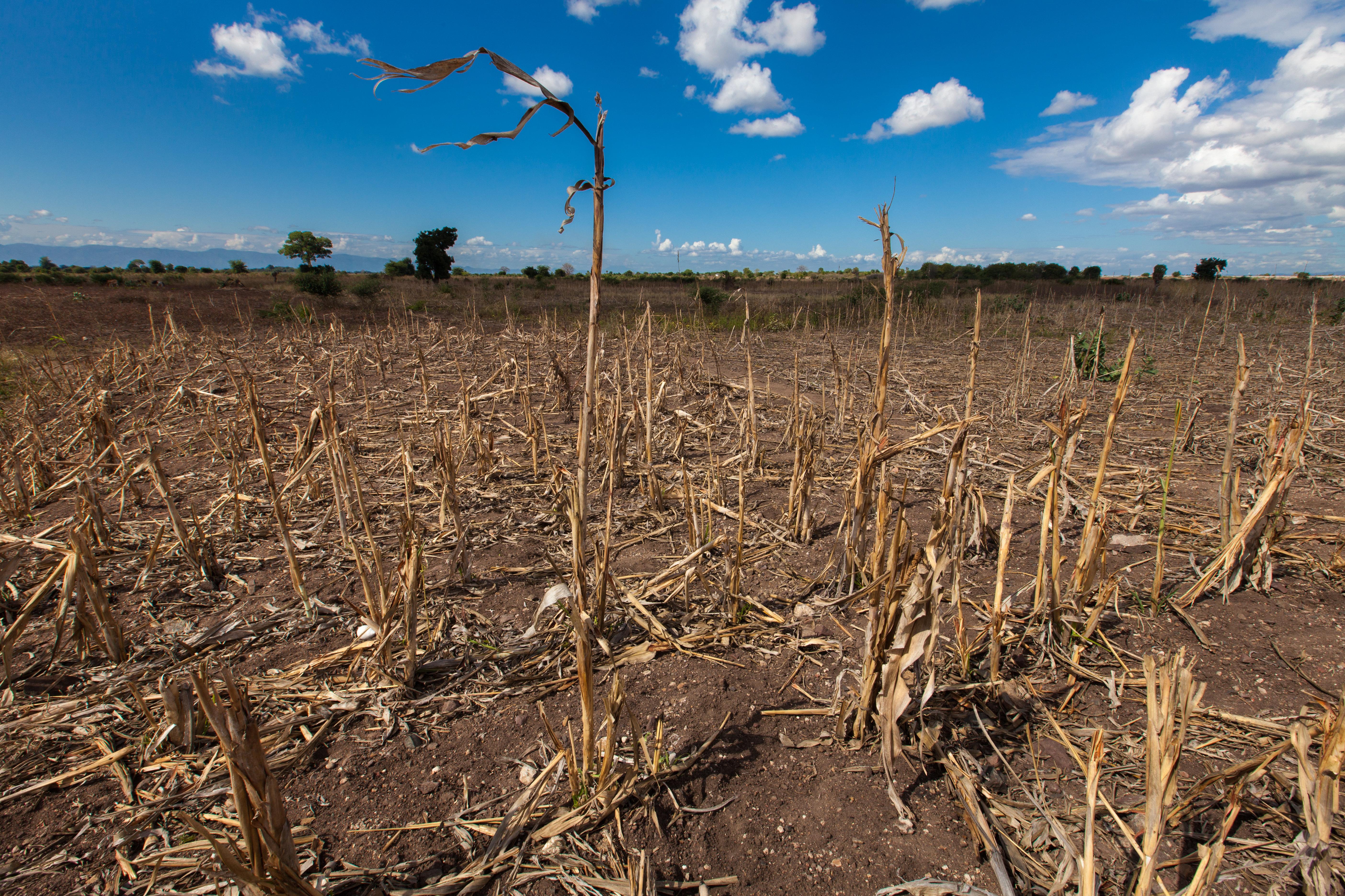 La FAO met en garde contre les menaces de perte de la