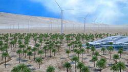 Blockchain: Le projet de ferme éolienne géante à Dakhla prend du retard, selon Maghreb
