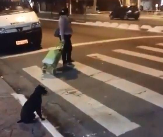 Αυτός ο έξυπνος σκύλος ξέρει πότε ακριβώς πρέπει να διασχίζουμε μία διάβαση
