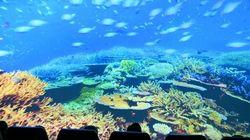 «Ωκεανοί: Ο Γαλάζιος Πλανήτης μας» στο