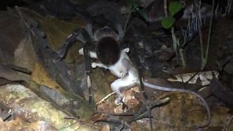 spider eating opossum
