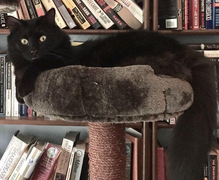buddy cat found