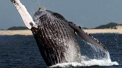 Μία φάλαινα τους έκανε