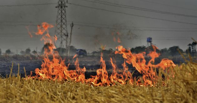 Air Pollution From Crop Burning Costs India $30 Billion A Year, Says