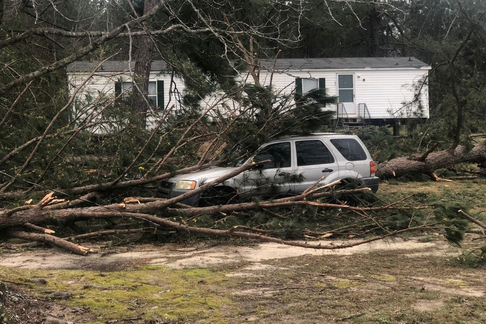 A tree fell on a car in Lee County near Beauregard.