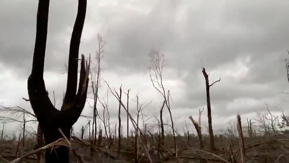 Damaged trees seen following tornadoes in Beauregard.