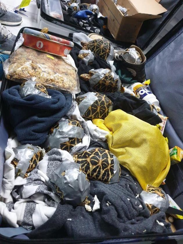 押収されたスーツケースに入っていた生きたカメ