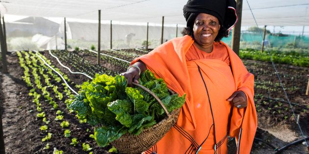 African Xhosa woman holding up beetroot she has harvested from her