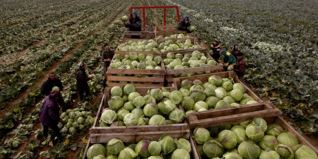 Agriculture Has Pulled The South African Economy Out Of