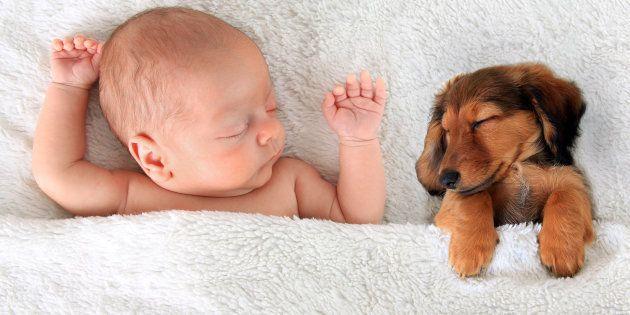 Newborn baby and a dachshund puppy sleeping