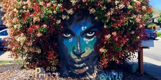 Flowering Bush Provides Fitting Tribute to