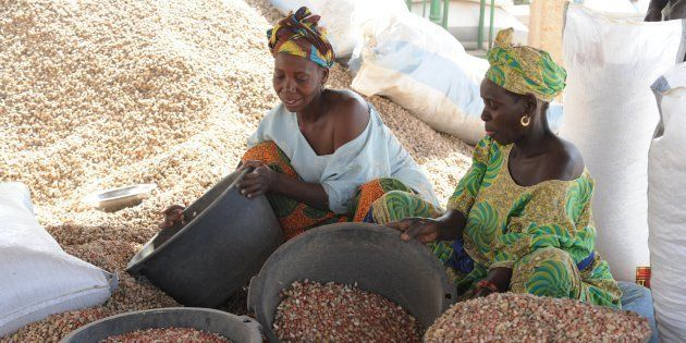 Women sort peanuts on February 23, 2013 in the central Senegalese village of Dinguiraye at a Chinese-owned