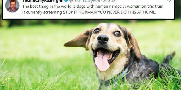 28 Of The Best Tweets About Dogs Because 2017 Has Been