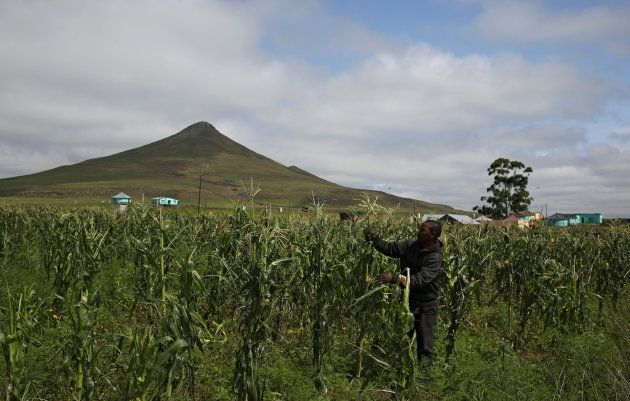 'It's Time For The ANC To Get Land Reform