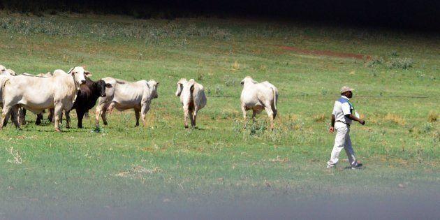 Speed Up Land Reform, Urges ANC NEC