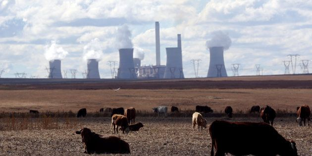 Cows graze as steam rises from the cooling towers of Matla Power Station, a coal-fired power plant operated...