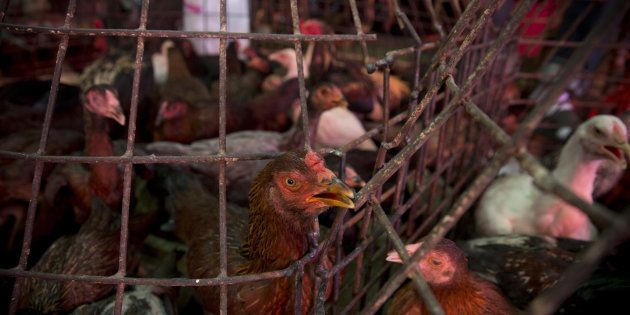 'We Are Losing Jobs Because The Majority Of Our Poultry Comes From The